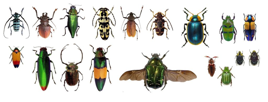 scinatex a group of beetles of various species on a white background