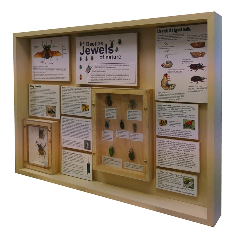 a natural history exhibit case by scinatex featuring beetles for education