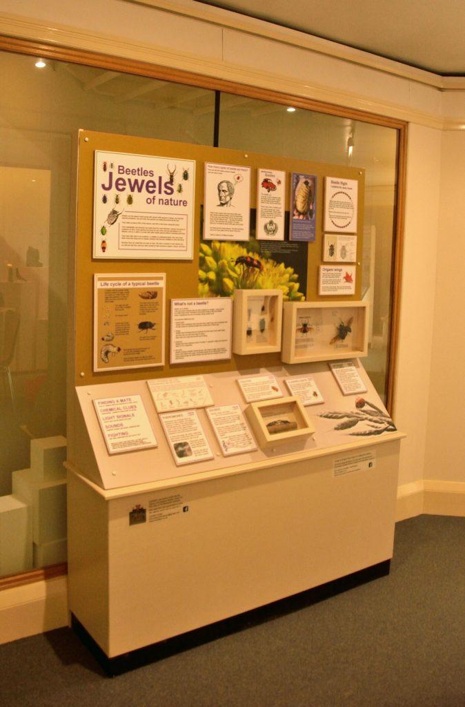 Northampton natural history beetle exhibit