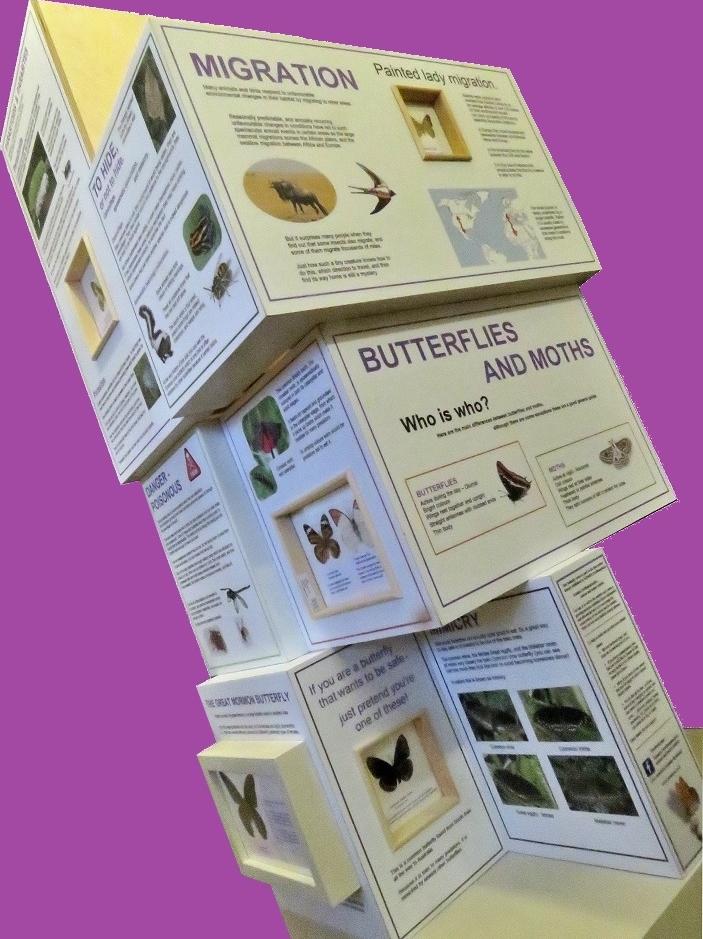 Butterflies and moths, Northampton