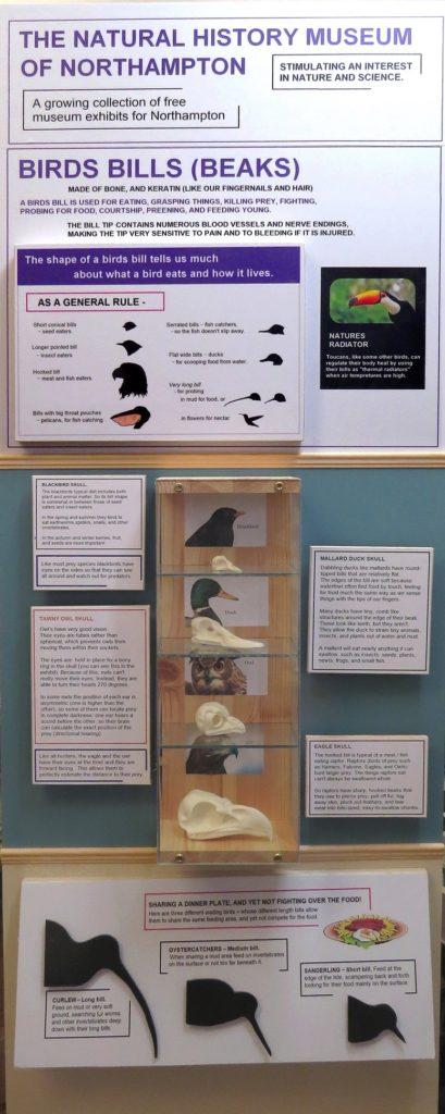 Northampton natural history museum bird bills exhibit